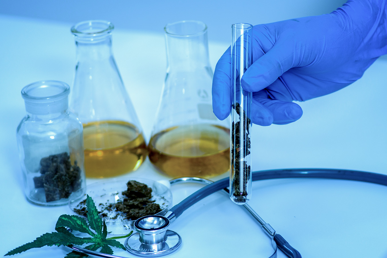 Herbal medicine cannabis in lab.